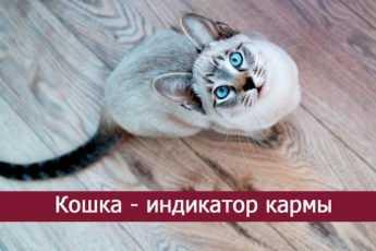 Кошка - индикатор кармы