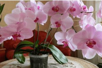 Интересный факты об орхидеи
