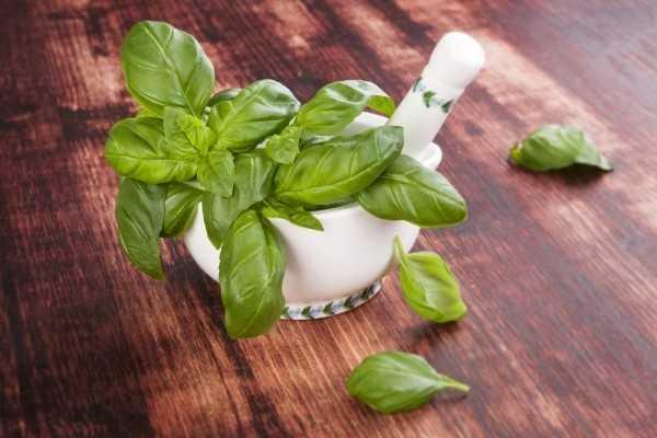Укусы насекомых: ТОП-7 натуральных средств от зуда