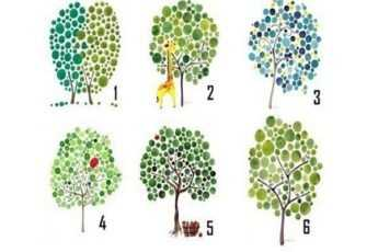 Тест: выберите дерево и узнайте, в правильном ли вы направлении двигаетесь